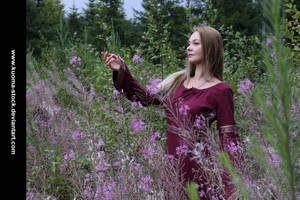 Fireweed 4 by Kuoma-stock