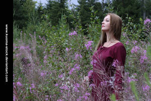Fireweed 5 by Kuoma-stock