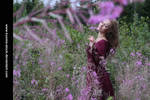 Fireweed 10 by Kuoma-stock