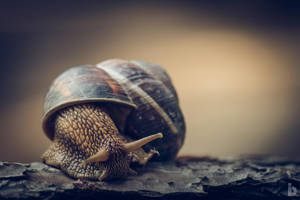 Snailin' Around II by ilkerdemirbolat