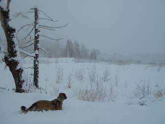 Snow Dog 2 by Shiningstarofwinter
