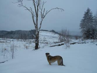 Snow Dog 1 by Shiningstarofwinter