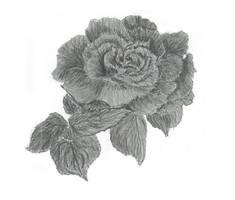 rose 2 by alpha-dragon