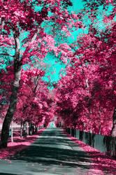 Pink Paradise I by elubelu