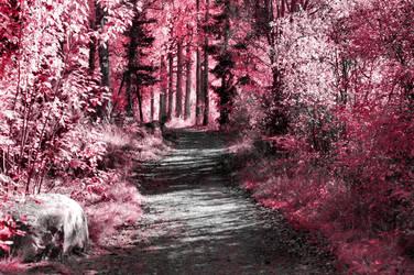 Pink Paradise II by elubelu