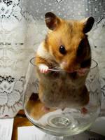 hamster by kaktusetarretis