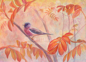 Rose-breasted Robin in the Rowan. by leelastarsky
