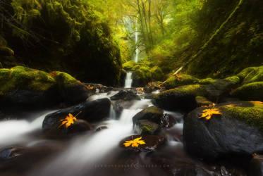 Autumn Dream by Jordan-Roberts
