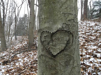 Tree Heart by TimeKiller357