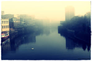 swan in the fog by james661
