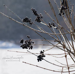 frozen by kaoru-kamiya