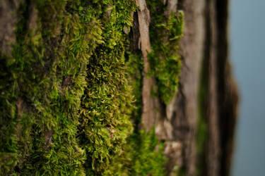 Green Tree by bepop