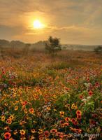 Spring Morning by gregner