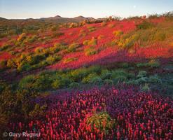 Desert Fire by gregner