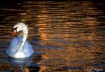 Swan Lake by gregner