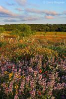 Wildflower Fields by gregner