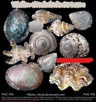 Mussels Set by YBsilon-Stock by YBsilon-Stock