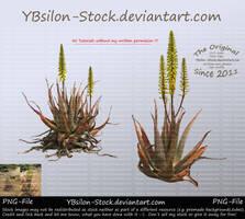 Aloe Vera With Yellow Blossoms by YBsilon-Stock by YBsilon-Stock