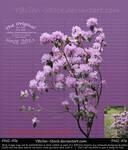 Purple Flower-Bush by YBsilon-Stock by YBsilon-Stock