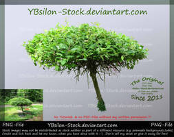 Little unusual Tree by YBsilon-Stock by YBsilon-Stock