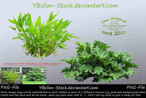 Foliage Plants by YBsilon-Stock