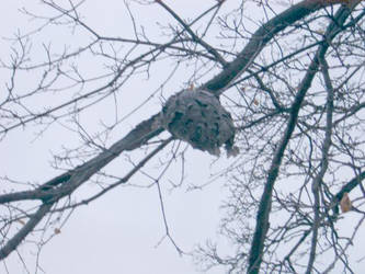 Woodbine St. Wasp Nest 1 by Acsumama