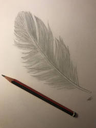 Feather/value Practice by SpiritWolf3639