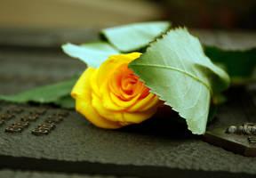 yellow rose by music-mup