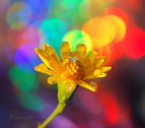 Festive Season by Phenix59