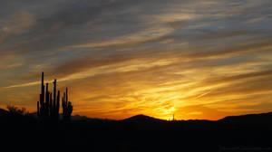 One November Morning Background by Phenix59