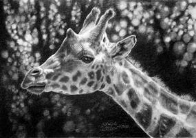 Giraffe Portrait in graphite by moniquepetportraits