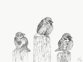 Three sparrows by Lifety