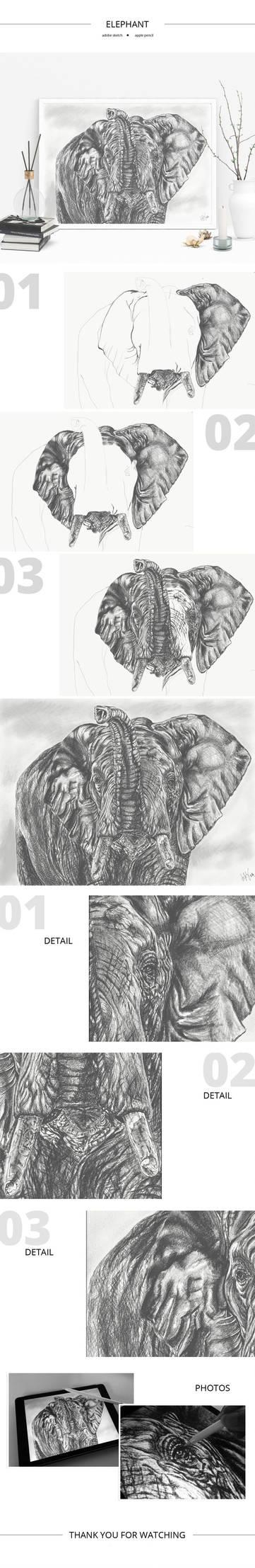 Elephant sketch by Lifety