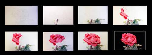 Step by step (Rose) by Oscar-Manuel