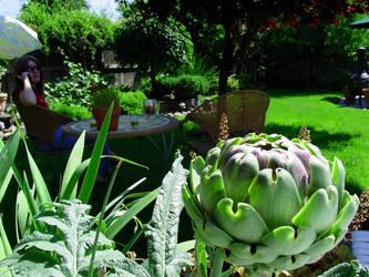 Backyard 26 by almostAMAZING
