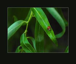 Ladybug Bird by almostAMAZING