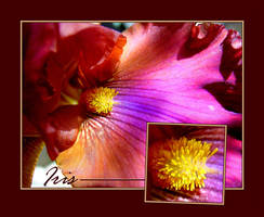 Iris by almostAMAZING