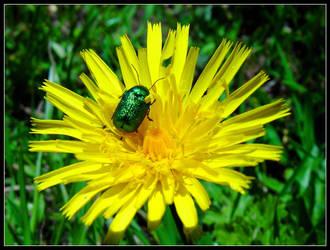 Switzerbug by almostAMAZING