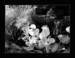 L'eau Plante Noircir et Blanc by almostAMAZING