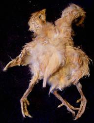 Deformed Chicken Gaff 2 by DETHCHEEZ