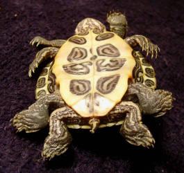 8 Legged Freak Turtle Gaff 3 by DETHCHEEZ