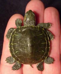 8 Leg Deformed Freak Turtle 1 by DETHCHEEZ