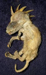 Mummified Baby El Chupacabra 3 by DETHCHEEZ
