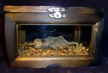Mummified Chupacabra Display 1 by DETHCHEEZ