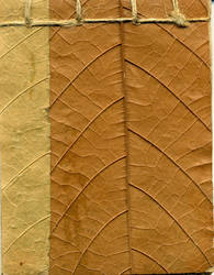 Leaf texture by FridayNinja