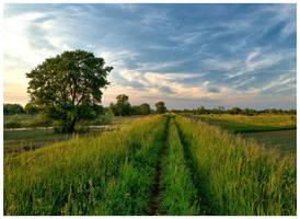 Mazovian landscape 2 by Mommus