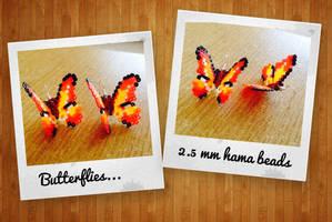 Butterflies by Echilon