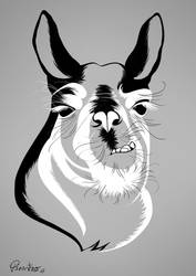 Lama Scetch by pirastro