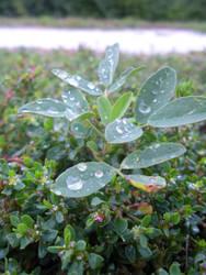 Dew Drop Center Piece by GogglesV2