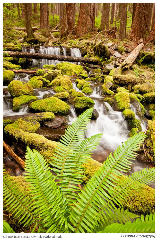 Sol Duk Rain Forest II by snak